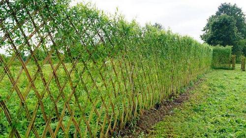 Забор для усадьбы